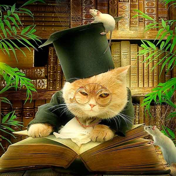 ученый кот психология